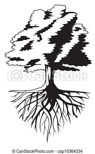 raiz árvore - csp10364334