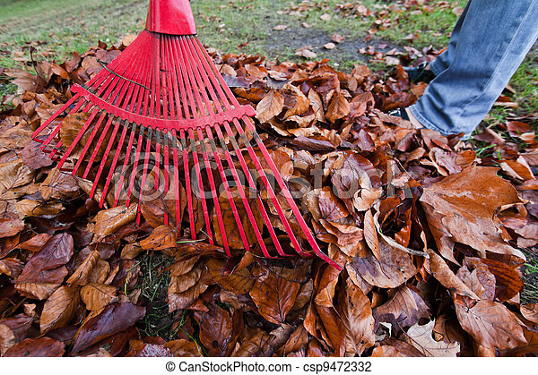 rake leaves. remove leaves. gardening in the he - csp9472332