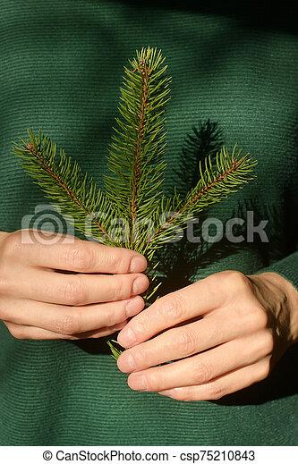 rama, pino, tenencia, mujer, árbol - csp75210843