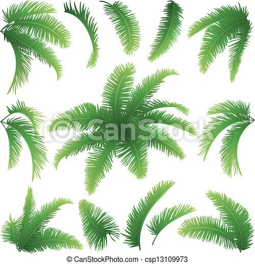 Ramas, árboles de palma. Conjunto, ramas, hojas, árboles ...