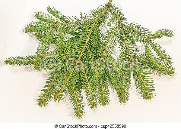 ramas de árbol de Navidad sobre fondo blanco - csp42558590