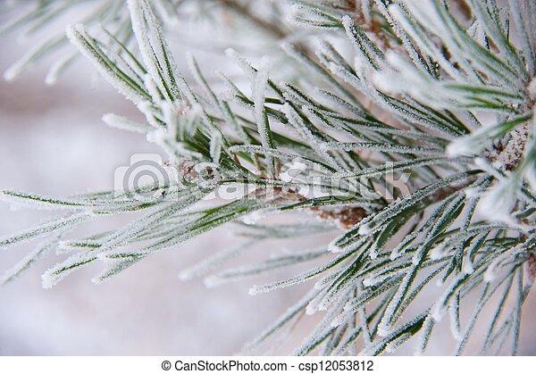 Una rama de pino - csp12053812