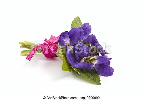 Bouquet de violetas de bosque - csp19799990