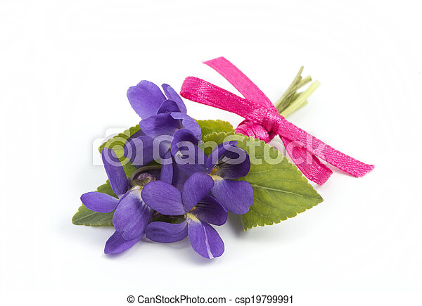 Bouquet de violetas de bosque - csp19799991