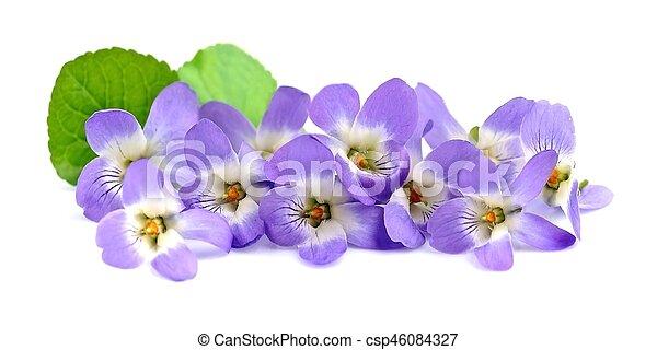 Un ramo de flores violetas. - csp46084327