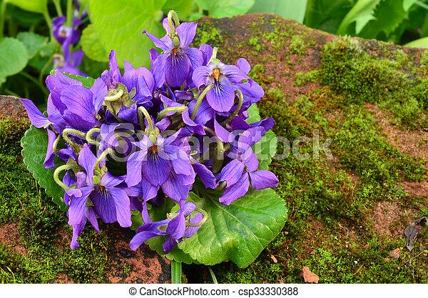 Bouquet de violetas fragantes - csp33330388