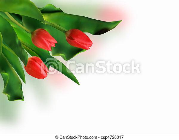 Bouquet de tulipanes rojos de primavera. - csp4728017