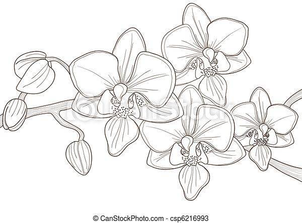 ramoscello, orchidea - csp6216993