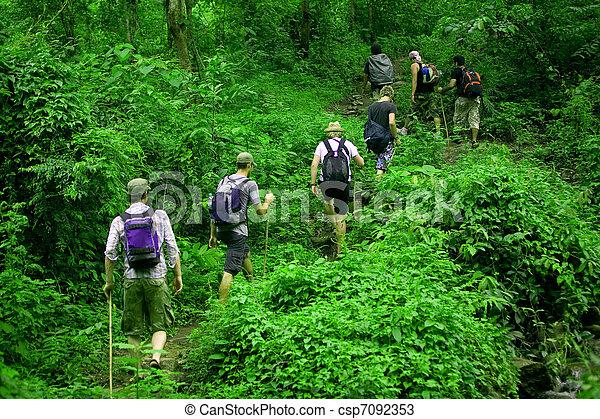 randonnée, jungle - csp7092353