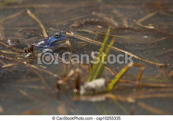 rane, primavera - csp10255335