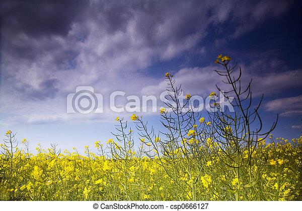 rape field - csp0666127