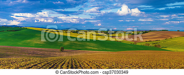 Rapeseed yellow fields in spring - csp37030349
