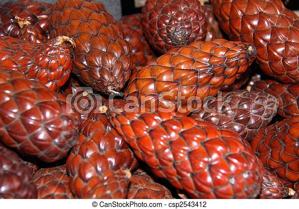 Raphis vinifera, Raphiafrüchte - csp2543412