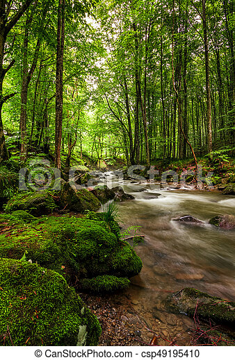 Rapid stream in green forest - csp49195410