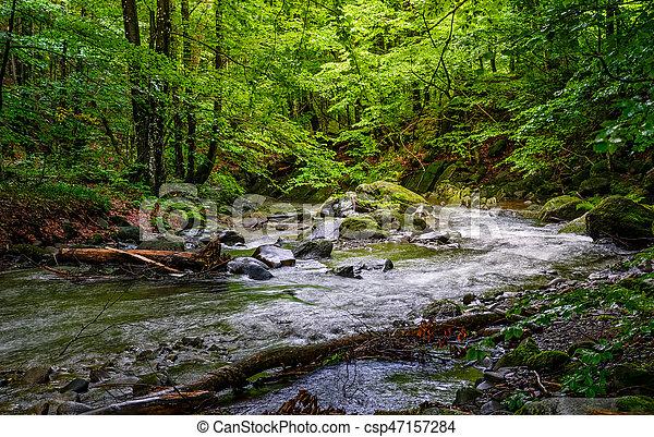 Rapid stream in green forest - csp47157284