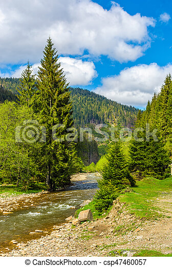 Rapid stream in green forest - csp47460057