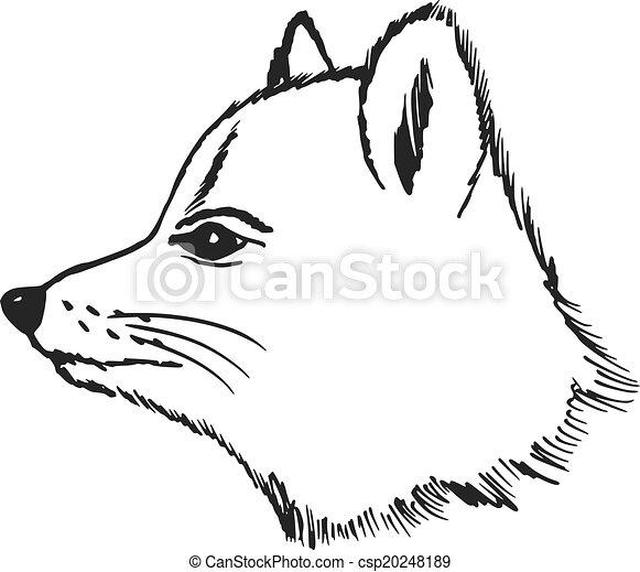 raposa polar - csp20248189
