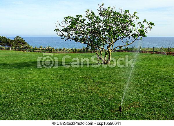 Rasen Bewässerungssystem rasen bewässerung irrigationsystem ficus bewässerung