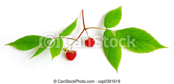 Raspberry branch on white - csp0391619