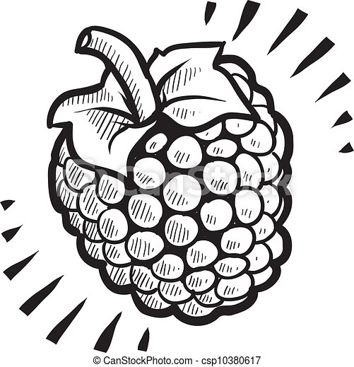 raspberry fruit sketch doodle style fresh juicy raspberry rh canstockphoto com raspberry clipart strawberry clip art black and white