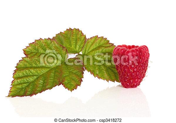 Raspberry Fruit - csp3418272