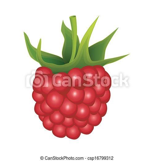 Raspberry on a white background - csp16799312