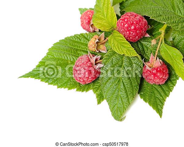 Raspberry on white - csp50517978