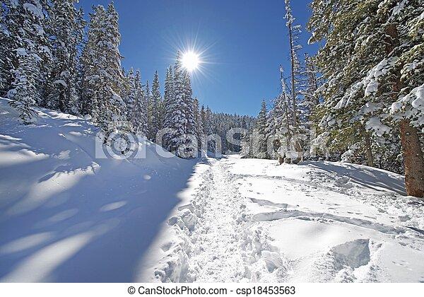 El sendero del bosque - csp18453563