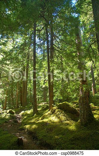 rastro, floresta - csp0988475