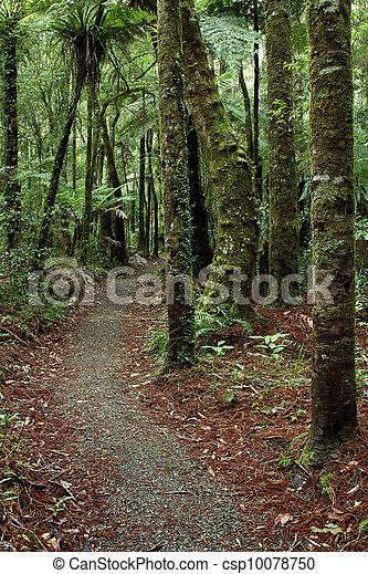 rastro, floresta - csp10078750
