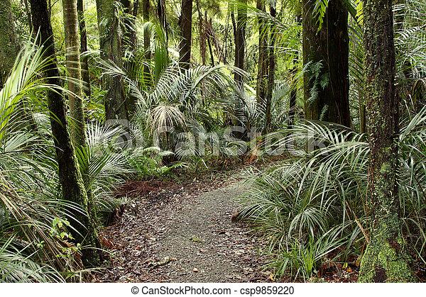 rastro, floresta - csp9859220