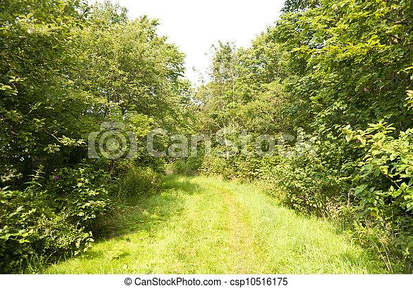 rastro, floresta - csp10516175