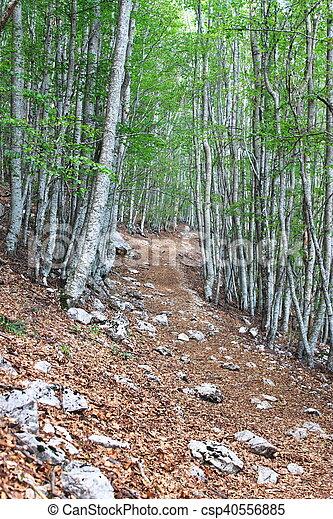 rastro, floresta - csp40556885