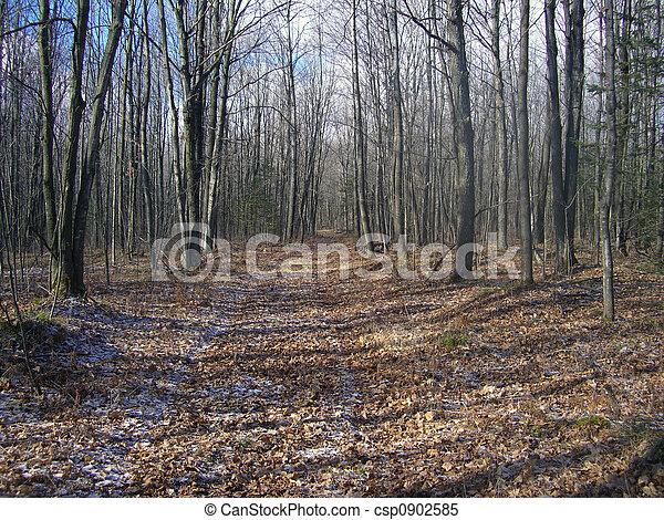 rastro, floresta, selva - csp0902585