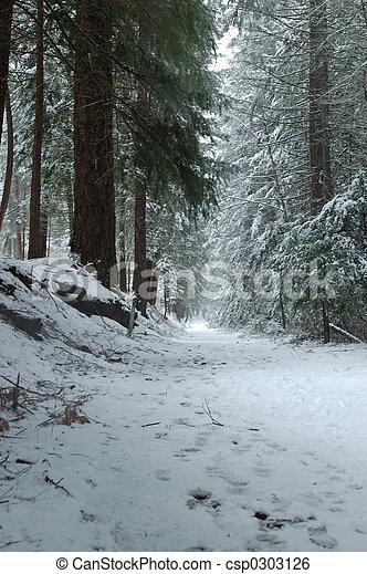 rastro, madeiras, nevado - csp0303126