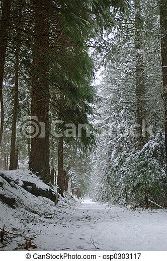 rastro, madeiras, nevado - csp0303117