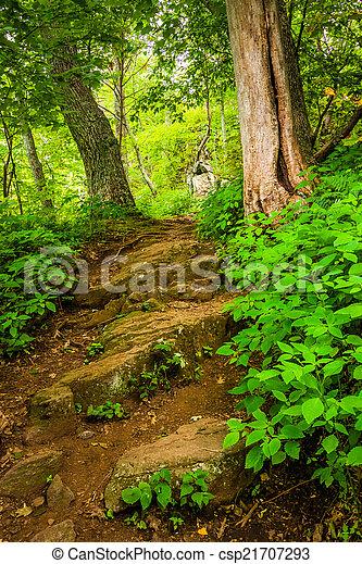 Steep Hill en un sendero en el parque nacional Shenandoah, Virginia. - csp21707293