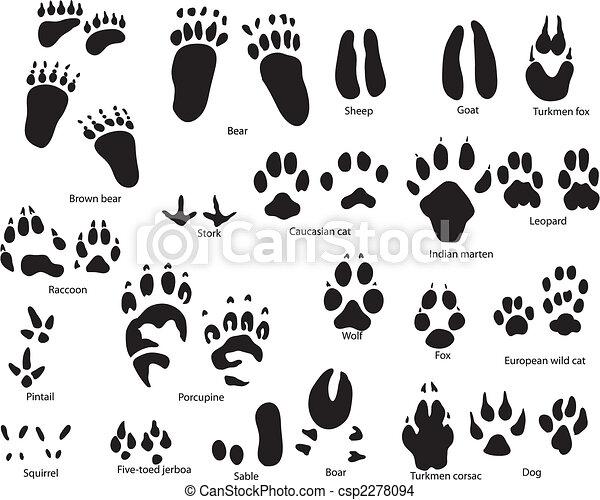 rastros, animal, título - csp2278094