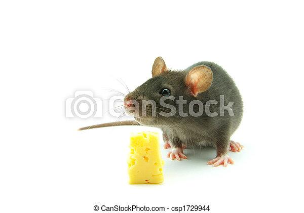 Ratón - csp1729944