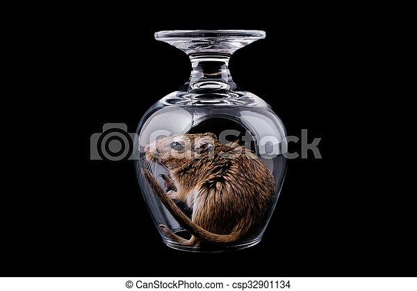 Ratón en un vaso, negro aislado - csp32901134