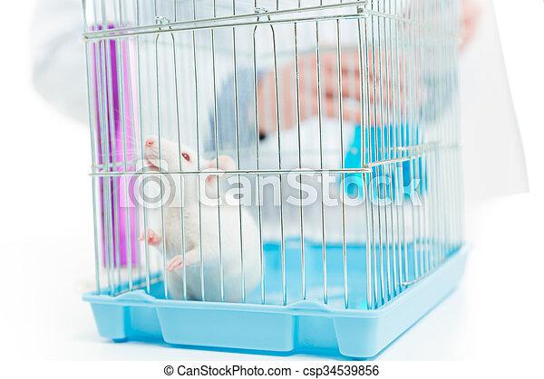 Rat in chemist laboratory - csp34539856