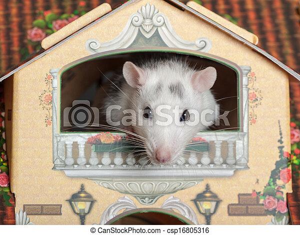 rat on the balcony - csp16805316