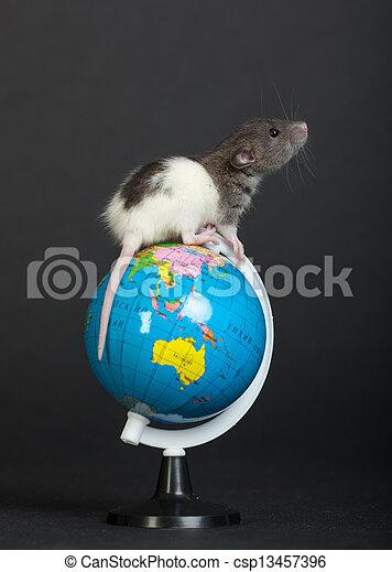 rat on the globe - csp13457396
