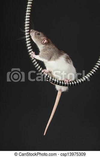 rat on the tube - csp13975309