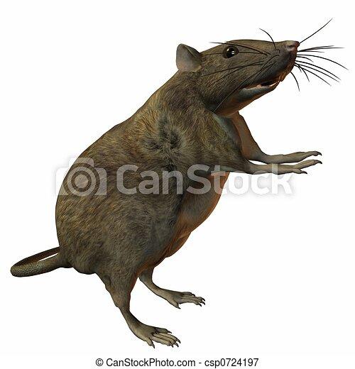 Rat - csp0724197