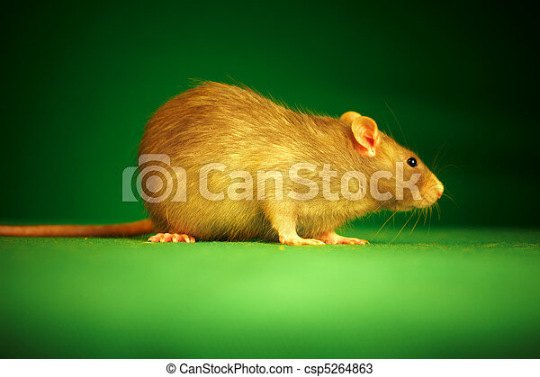 Rata en un fondo verde - csp5264863