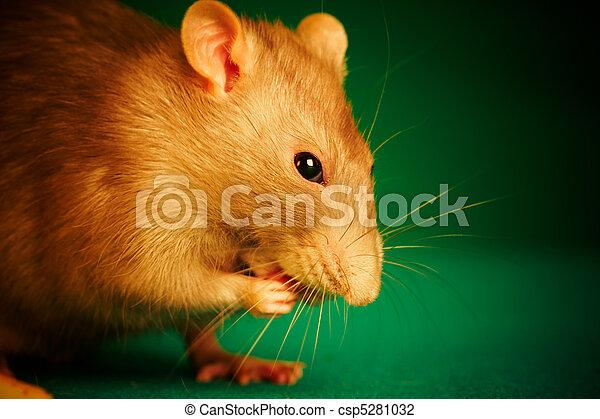 Rata en un fondo verde - csp5281032