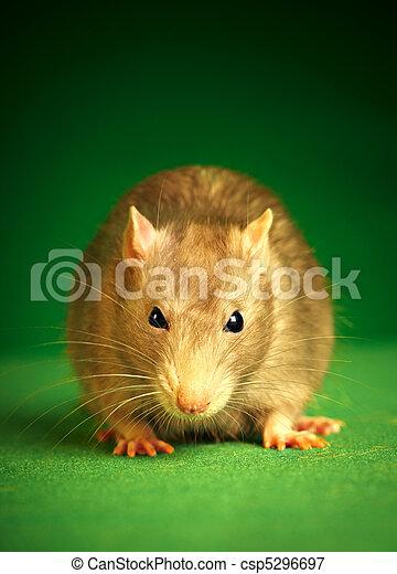Rata en un fondo verde - csp5296697