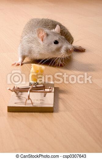 Rata y queso - csp0307643