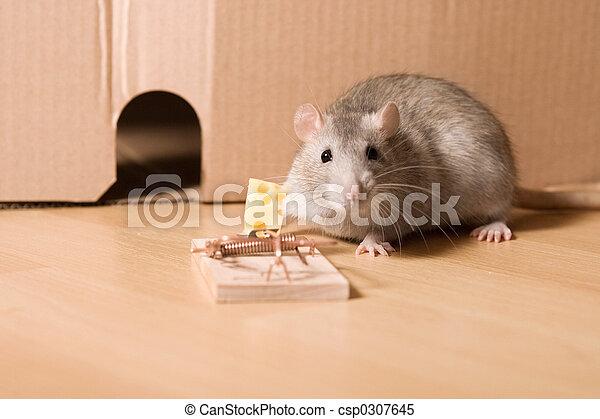 Rata y queso - csp0307645